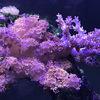 【ヌメリトサカ飼育方法】照明と水流の強さに注意して飼育