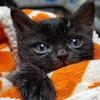 通常より小さすぎる子猫、体重はわずか50グラム