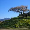【天体撮影記 第21夜】 福島県 小沢の桜と星景写真と一本桜の紹介などなど
