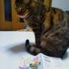 涙もホロリとこぼれた素敵な休日でした(*˘︶˘*).。.:*「作ってあげたい小江戸ごはん3」(猫好き柔道整復師 @3t_2 さん)+猫さん写真三枚