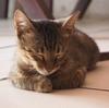 世界猫写真展~グアテマラ東部リオ・ドゥルセより