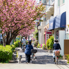 4月上旬:八重桜が咲き誇る桜新町周辺をお写んぽ。其の参