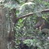 石神井公園の野鳥 オオタカ他 2021年6月27日
