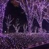 新宿のピンクのイルミネーション