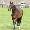 2016 2歳ディープインパクト産駒現在の最強馬は?