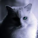 因幡の白猫〜備忘録〜