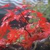 毎年、紅葉シーズンに伺っている箱根美術館の紅葉2019.11.27