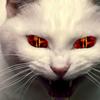 2度と寄らせない!超効果的な発情期の猫の撃退方法とは?