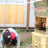 巣箱の中は  Bienenhaus besuchen