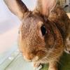 ウサギのちまきの1ヶ月の食事代