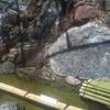 埼玉で発見!白蛇弁天様を訪ねて熊野神社へ春詣。