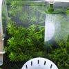 ガラスの苔が無くなると同時、水草も元気が無くなる