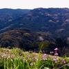 山肌に注目!桜色模様 糸島♪