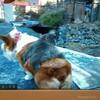 志村動物園 犬と仲良しの野子猿