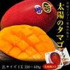 宮崎マンゴーの最高峰! 宮崎産 完熟マンゴー「太陽のタマゴ」