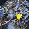 春は花の開花が楽しみですね