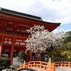京都桜シリーズ 世界文化遺産 賀茂別雷神社(上賀茂神社)