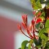 春の日差しと花への喜び