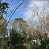 落葉樹の葉も落ちて太陽の光も照り