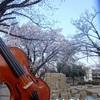 国立ストリートピアノ Vol.5「Play Me, I'm Yours 」お花見に最高満開の桜♪