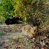 猫発見‼️