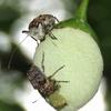 新宿御苑の植物と虫の関係を捜査