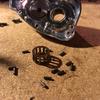 '12 ANTARES HG Maintenance #4 (Roller Clutch)