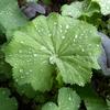 雨に歌え葉