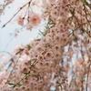 フィルムで春の振り返り。①