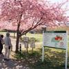 宇都宮城址公園の桜【宇都宮散策】