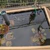 庭池の様子(2021年9月)