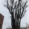 裸ケヤキの木の上空を旋回中のトリの目から見た郊外枯野の風景は