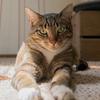 ひだまりの猫