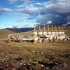 内蒙古からチベット7000キロの旅㊱ ナクチューから羊八鎮へ