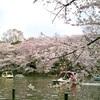桜の花言葉って