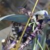 【FGO フィギュア】なんだこのギミックは!?『Fate/Grand Order』ランサー/ブリュンヒルデのフィギュアが予約開始【ブリュンヒルデ フィギュア】