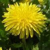 春の野花 (その2)