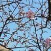 【夫婦ツーリング】河津桜を見に行ったら残念なことになった。