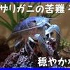 青いザリガニの苦難(4)