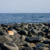 海と共に生きる(2)