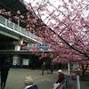 2月は三浦の河津桜を観ながら小学校の同窓会に久しぶりに行く・・・つもり