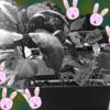 家庭菜園☆大失敗