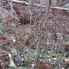 移植地の藪刈りと竹柵の交換を     改訂1