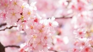 「花見」って英語でなんて言う?春と新年度を楽しむ!つぶやきフレーズ