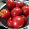 【レシピ】絶品手作りトマトソース