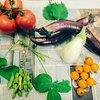 【予定変更します!】ツヤッツヤのミニトマト