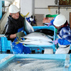 【前兆】高知県起きで寒ブリ大漁~南海トラフ地震の前兆か?