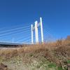 鳥撮り@多摩川(南多摩)で、モズのペア