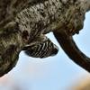野鳥撮影に行ってきました@奈良山公園ぱーとすりー