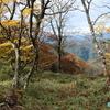 魔の山「大台ケ原」 ― 紅葉を強調して撮ってみた ― 紅葉《#6》